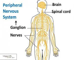 Peripheral nervousSystem