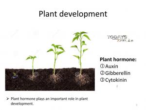 Plant development TodaysAffair