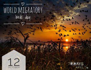world_migratory_bird_day