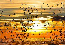 world_migratory_bird_day_2