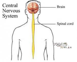 Central NervousSystem   todaysaffair